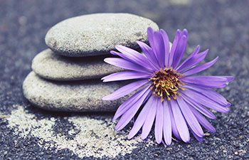 Zen Stones & Flower