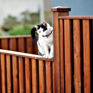 Vertical board fence