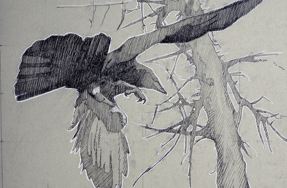 Study, Crow beneath Trees, graphite and Conte, 12 x 18 inches