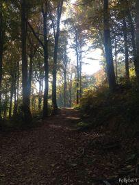 a walk/hike at Mt. Medvednica