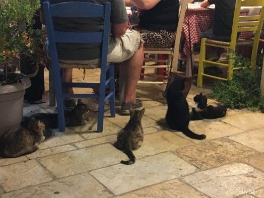 begging cats @Gaios