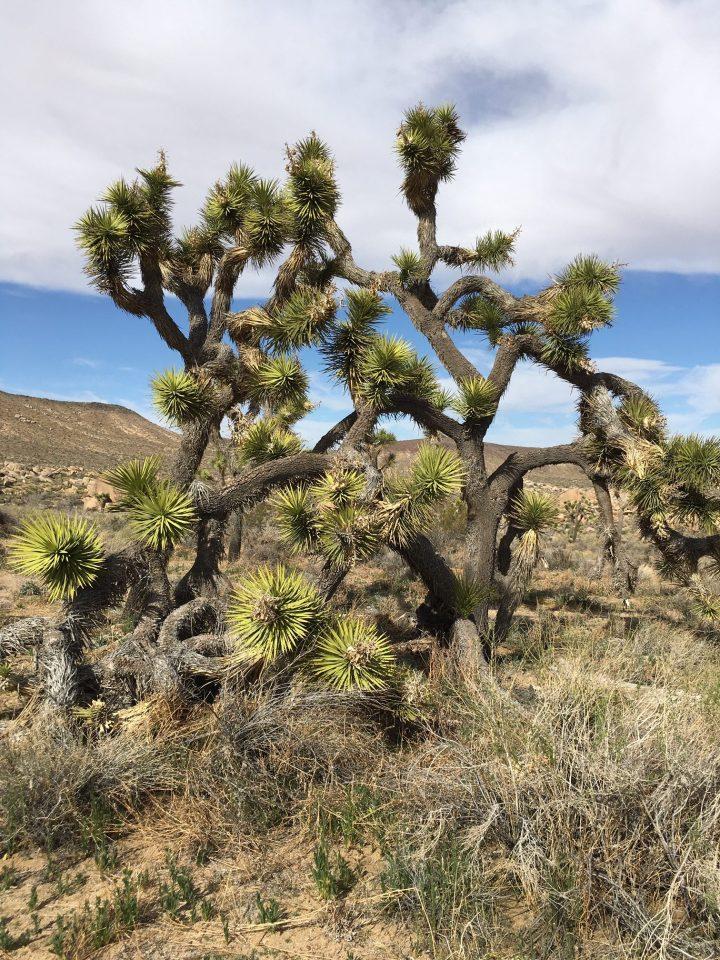 desert quest/ desert awakening