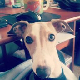 Adopting Luca
