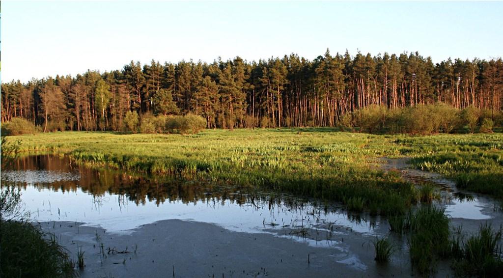 Parc paysager de Załęcze