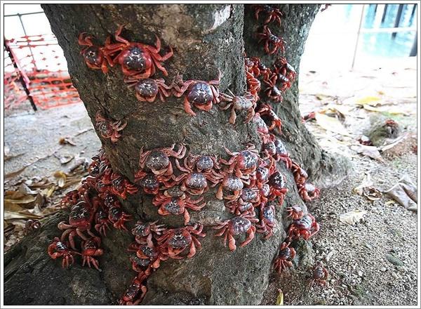 crabs-07022016-010