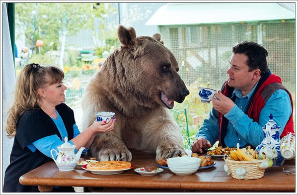 bear-stepan6