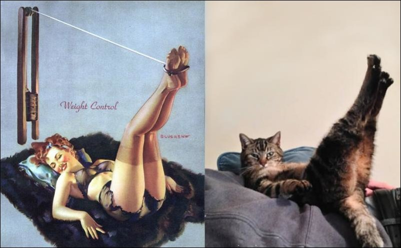 cats-pinup-girls-041