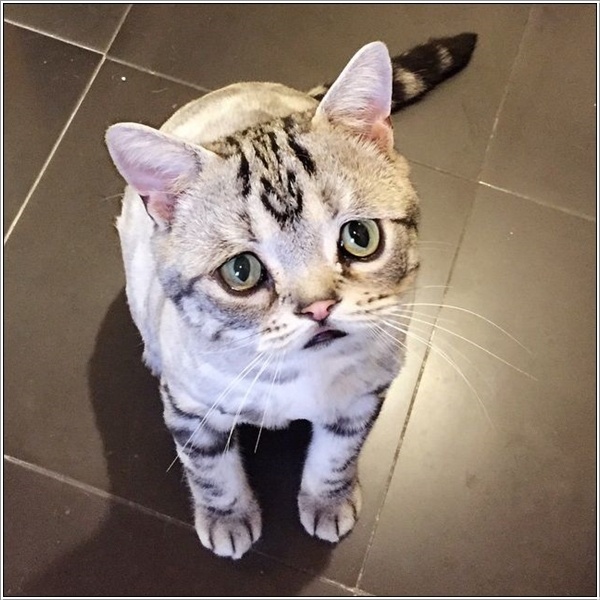 saddest-cat14