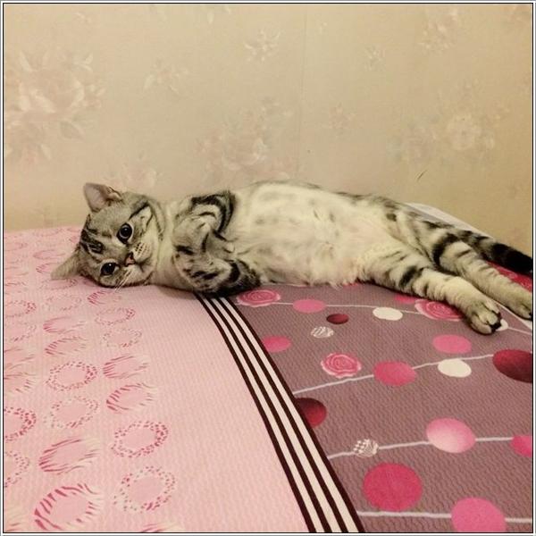 saddest-cat15
