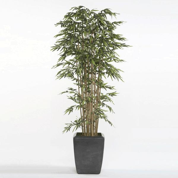 Árbol Bambú Premium