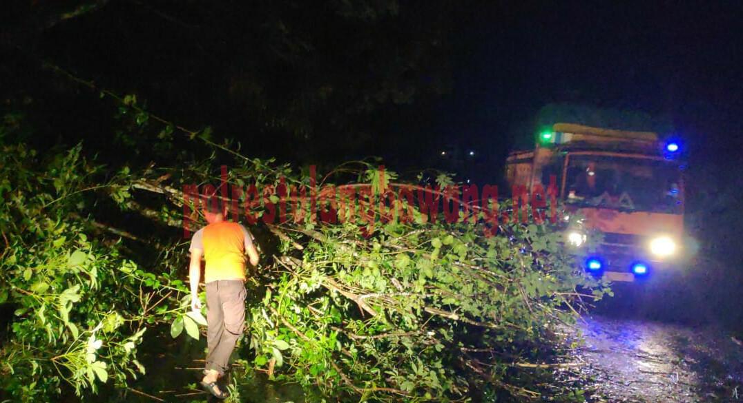 Petugas sedang mengevakuasi pohon tumbang yang menutup Jalintim di Kampung Panca Mulya, Kecamatan Banjar Baru