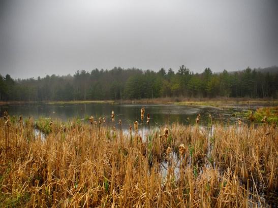 New Boston Pond