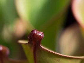 orchidaceae-20160228-27