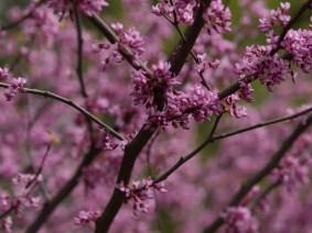 springflowers-20160518