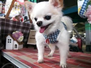 犬服屋kurumiさん