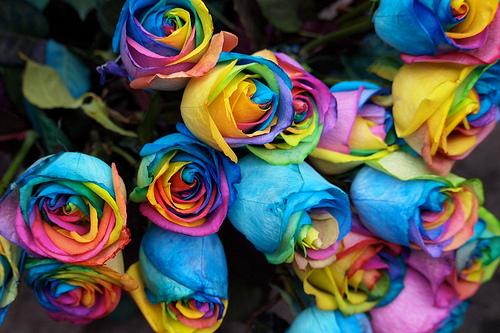 a dozen rainbow roses for gay, lesbian, bisexual, transgender pride