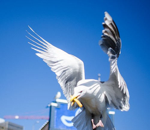 a picture of a seagull in flight who that is carrying a french fry in its mouth