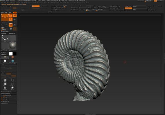Ammonite Hettange