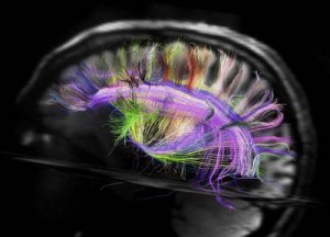 neural structure of the brain