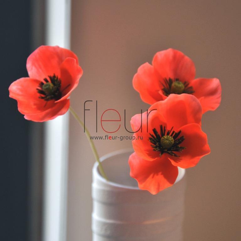 poppy-2