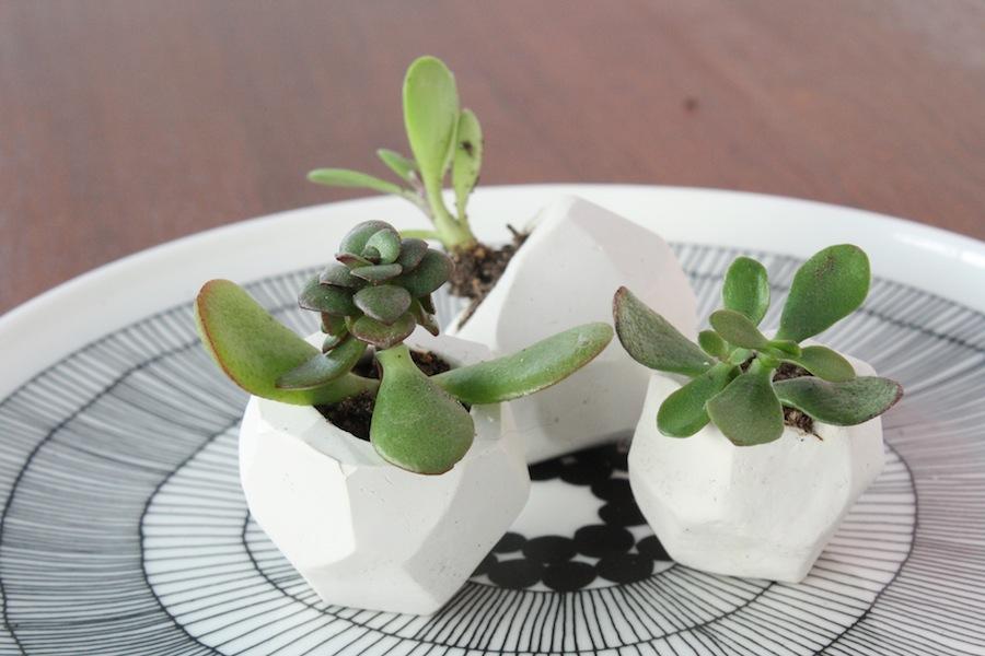 Wedding Favour Succulent Pots