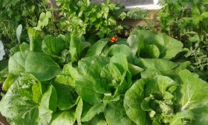 Chinese cabbage, celery, flowers.....