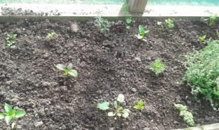 capsicums and herbs