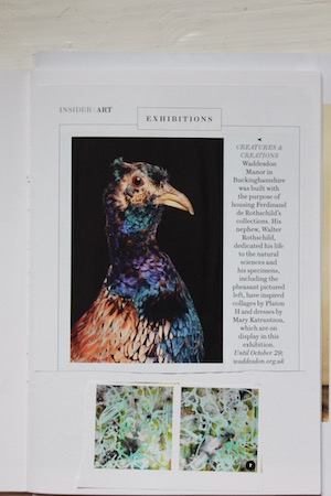 Pheasant2