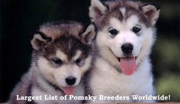 Pomsky Breeders