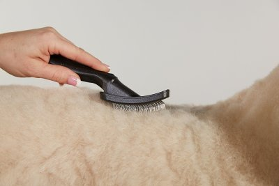 Audis Slicker Brush for Pomsky