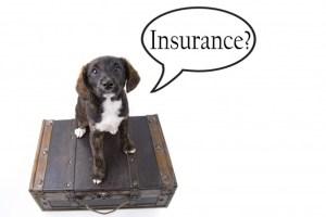 Pomsky insurance