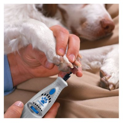 Dremel Pet Nail Grooming Tool for Pomsky