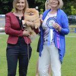 Pomeranian pes (male) soutěž