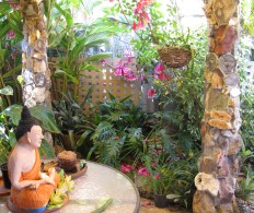 Native Fraser Island Creeper flowering, watched over by Buddha, who was made by Jack