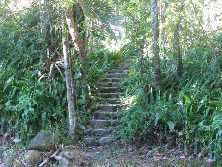 The steps lead up through thr rainforest to the house