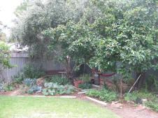 Fruit trees, plum, quince, apricot and passion fruit vine