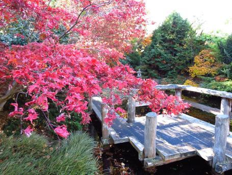 botanic gardens Tasmania 065_4000x3000
