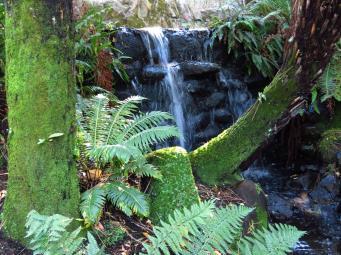 botanic gardens Tasmania 171_4000x3000