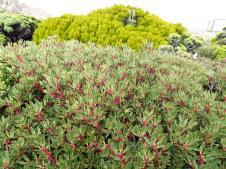 Sub-alpine plants