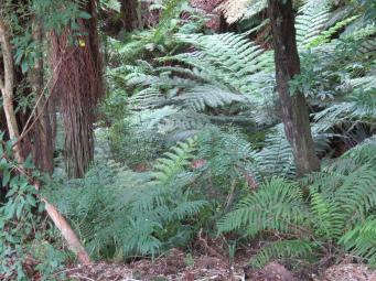 Walking through the beautiful lush New Zealand bush