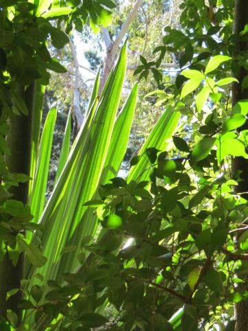 Botanic gardens 2 PC sx40 040_3000x4000