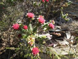 Canberra botanic gardens pc 027_4000x3000