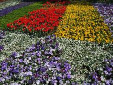 Floraide day2 jc 201_4000x3000