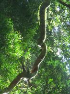 Dorigo National Park