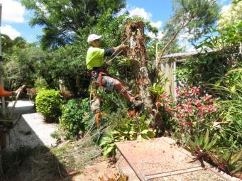 Big Jim tree cutting 050_4000x3000