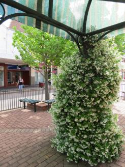 The scent of Jasmine permeated the air in the CBD as it climbed around the poles of the shady pergolas.