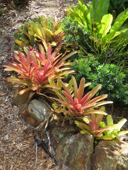 Bromeliads bat plant pc 012_3000x4000