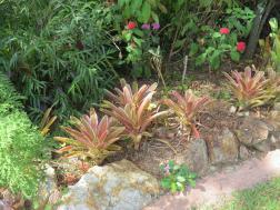 Bromeliads bat plant pc 018_4000x3000