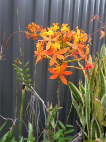 july garden-18_3000x4000