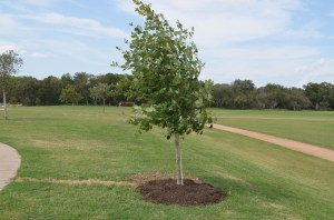 Mark Gregg Memorial Tree